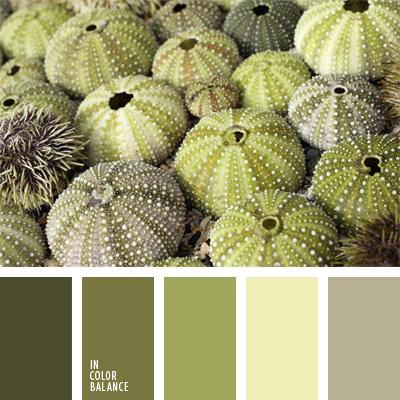 paleta-de-colores-492