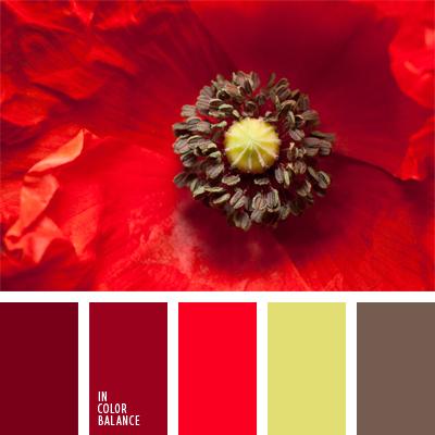 paleta-de-colores-555