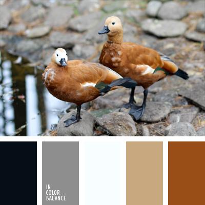 paleta-de-colores-644