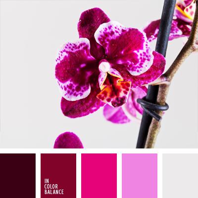 paleta-de-colores-677