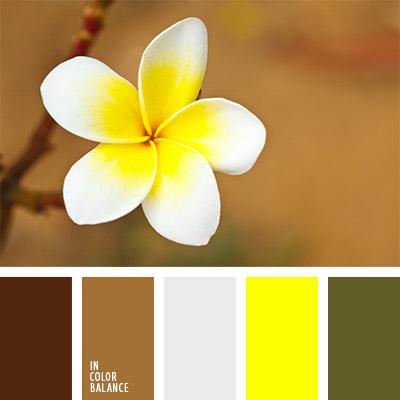 paleta-de-colores-793
