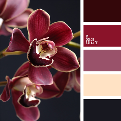 paleta-de-colores-906