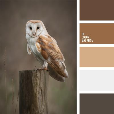 paleta-de-colores-953