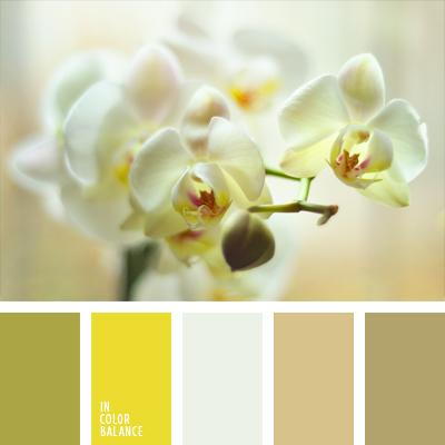 paleta-de-colores-1005