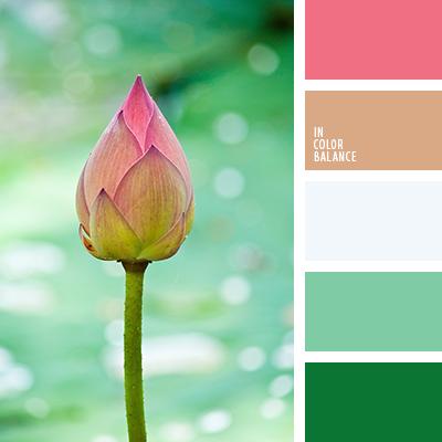 paleta-de-colores-1445