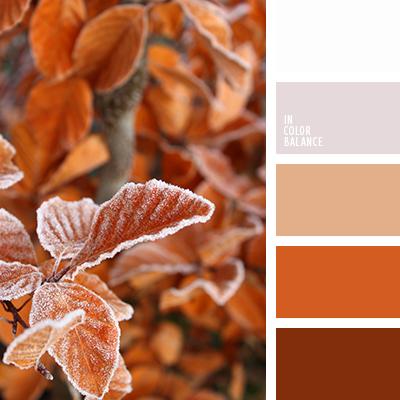 paleta-de-colores-2482