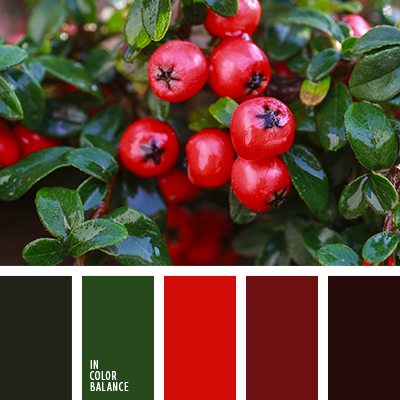 paleta-de-colores-2497